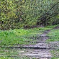 Старая дорога :: Игорь Торбеев