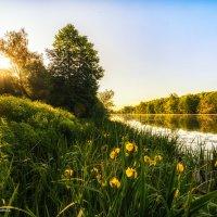 Солнечное настроение :: Наталия Горюнова