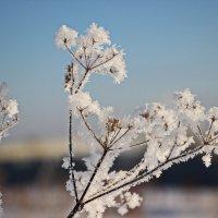 Дыхание зимы :: Александр Севастьянов