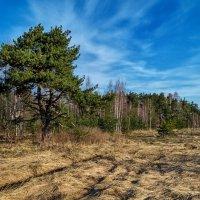 Середина весны 4 :: Андрей Дворников