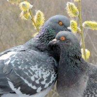 Весна , любовь и голуби. :: Hаталья Беклова