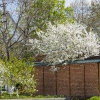 Весна в моем городе :: Игорь Сикорский