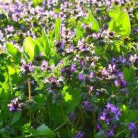 Весна пришла - природа радует объектив! :: Виктор Шандыбин