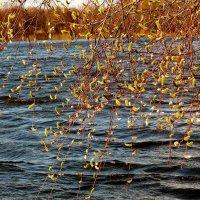 весенняя река :: Александр Прокудин