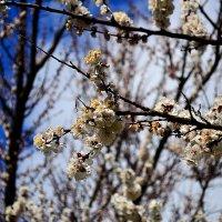Весна :: Сергей Землянский