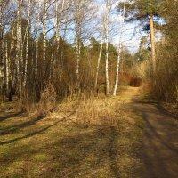 Цвет апреля :: Андрей Лукьянов