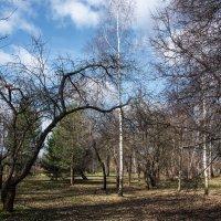 Весной в парке. :: Владимир Безбородов