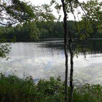 Серебряное озеро :: Наталья