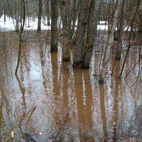 Снизу вода, сверху вода, апрель нам скучать не даёт никогда! :: Андрей Заломленков