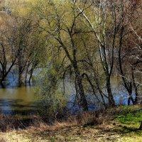 Апрель прощается с разливом... :: Лесо-Вед (Баранов)