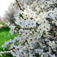 Апрельское настроение природы в Краснодаре :: Виталий Бараковский