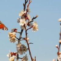 летающие цветы на вкусняшке :: Александр Прокудин