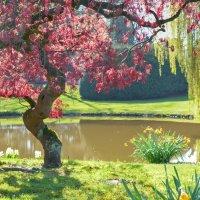 Весна :: Сергей Бордюков
