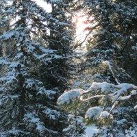 Первые лучики пробивались сквозь деревья . :: Любовь Иванова