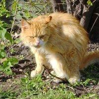 Я злой и страшный рыжий кот... :: Маргарита Батырева