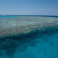 Коралловый риф. Красное море :: Ruslan