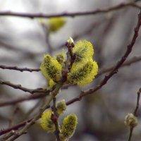 Весна :: Валерий Самородов