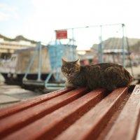 Балаклавский котик :: Алина Леонова