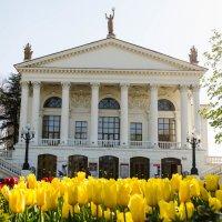 Тюльпановая весна в Севастополе :: Анна Выскуб