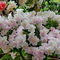 Цветущая весна :: Светлана
