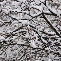 У природы нет плохой погоды... даже 23 апреля :: Валерий Подорожный