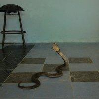 Я кобра, но я уже еда... ;( :: Владимир Куликов