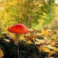 Осенняя поганка :: Александра Бояркина