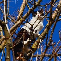 """""""Коты прилетели"""" :: Paparazzi"""