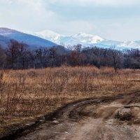Дороги, которые мы выбираем... :: Нина Борисова