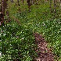 Весенний лес :: Леонид Сергиенко