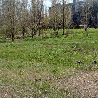 Просто весна... :: Нина Корешкова