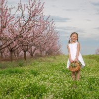 Персиковый сад :: Алексей Яковлев