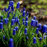 Весна... :: Светлана Белкина