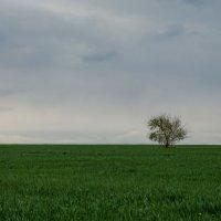 Одиночество или независимость и свобода? :: Васильевич .