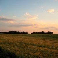 Хлебное поле в свете заката :: spm62 Baiakhcheva Svetlana