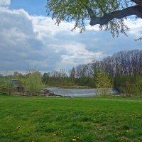 Взволнован мир весенним дуновеньем... :: Galina Dzubina