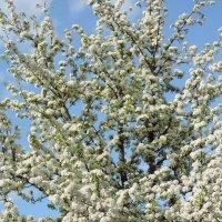 весна :: Taina