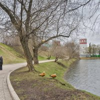 Весна...пасмурно... :: Ирина Шарапова