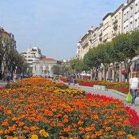 Целое море цветов. :: ИРЭН@ Комарова