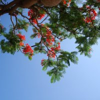 цветы и в небе голубом :: youry