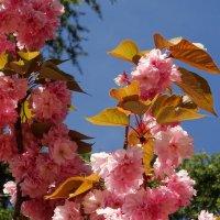Цвет весны... :: СветЛана D