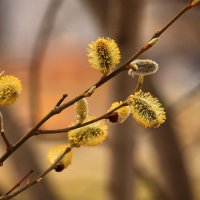 Краски весны :: Татьяна Ломтева