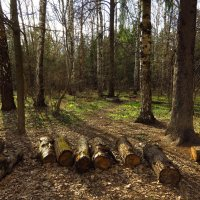 В весеннем лесу :: Андрей Лукьянов