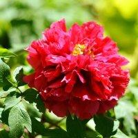 Цветок в Japan House. Иллиноис :: Марина Романова