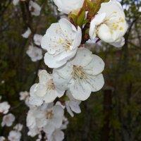 Весна прийшла :: Сергей Философ