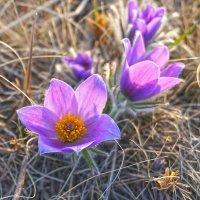 Первоцветы :: Екатерина Торганская