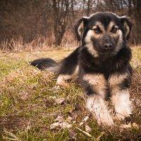 собака :: Ирина