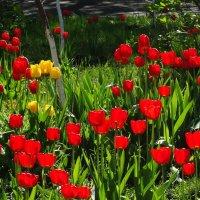 Цветущий апрель... :: Тамара (st.tamara)