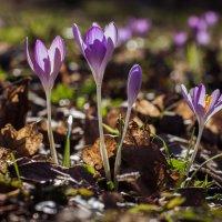 весна :: Ольга Адаменко