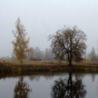 Осень в Ленобласти... :: El Кондукова